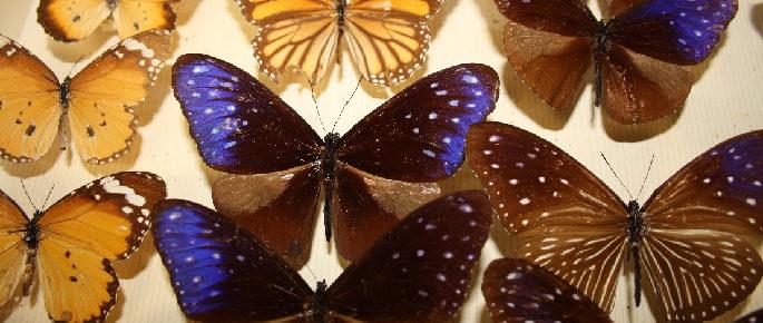 Collections naturalistes dans la région PACA