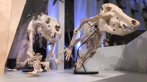 Acquisitions récentes du Muséum d'histoire naturelle de Marseille